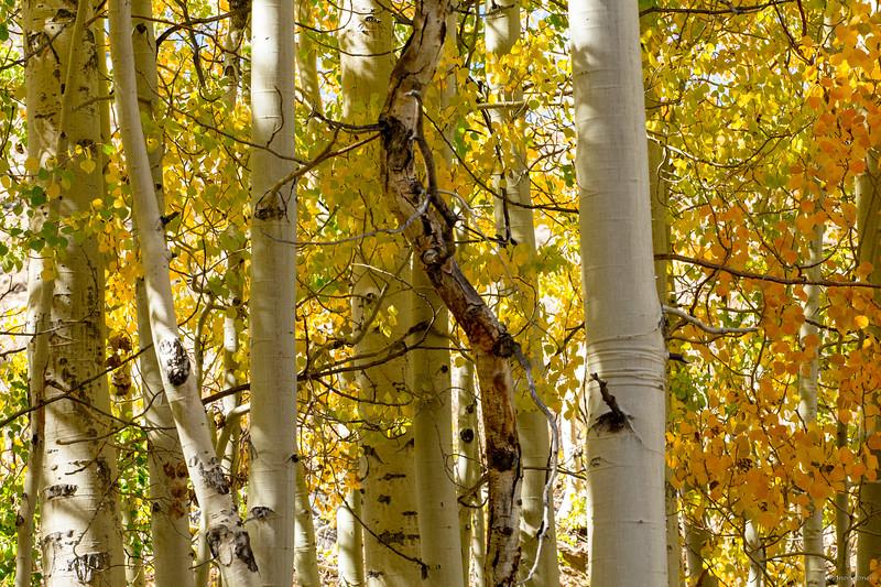 Aspen fall display