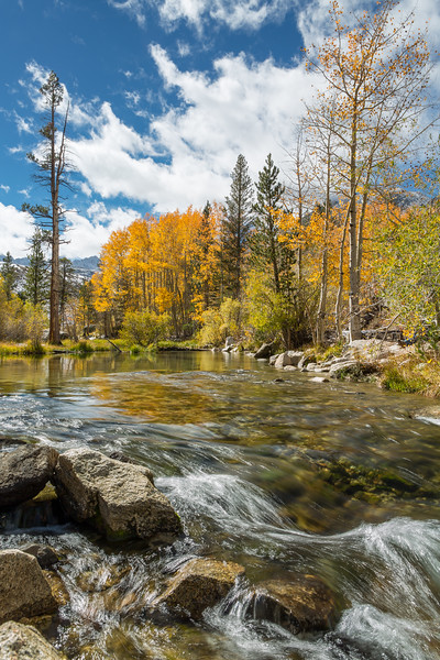 Lamarck Creek