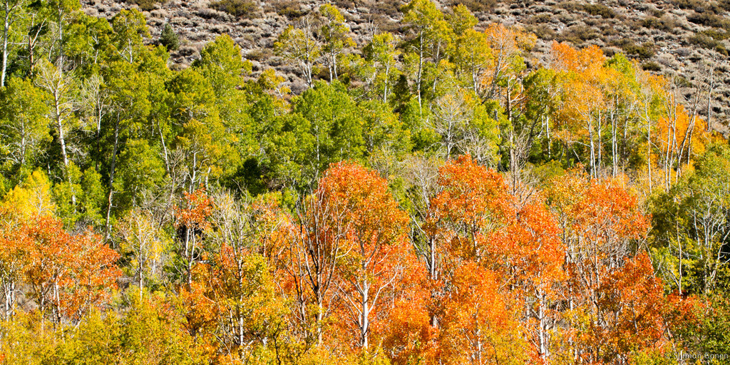 Fall in Aspendale
