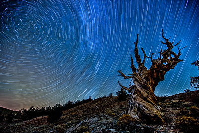 Bristlecone Pine Forest Star Trails