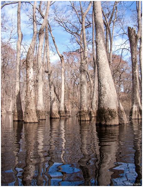 Murky Water Casts a Sky-blue Reflection