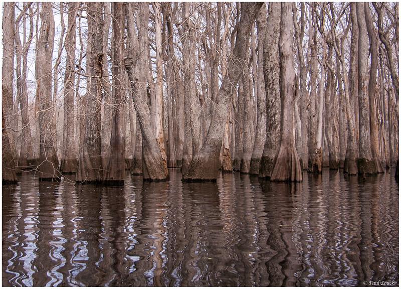 Solitude on Ebenezer Creek