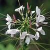 IMG_7891_flower
