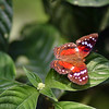 IMG_7911_butterfly