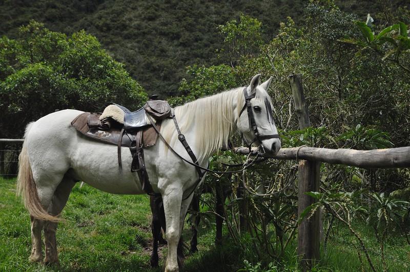 Ecuador '15 -  551