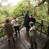 Ecuador 2012: Sacha Lodge - Birdwatching from the tree tower