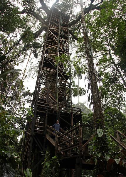 Ecuador 2012: Sacha Lodge - Looking up at the tree tower