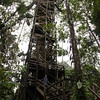 Ecuador 2012: Sacha Lodge - Looking up at the tree tower