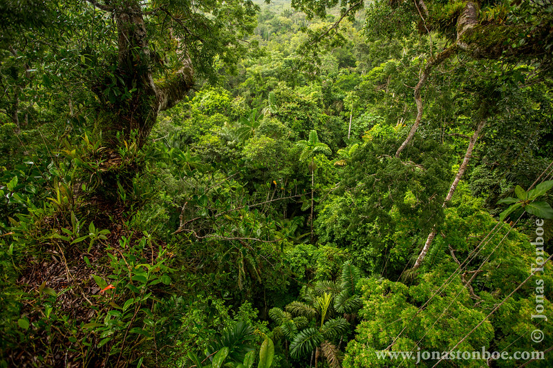 Rainforest Canopy