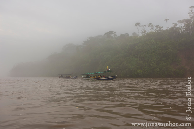 Napo Clay Lick Shrouded in Fog