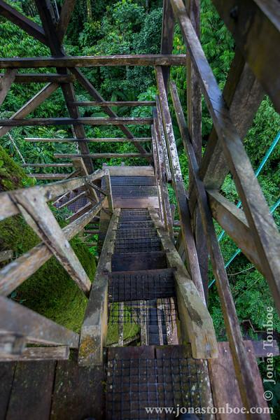 Kapok Tree Tower Stairs