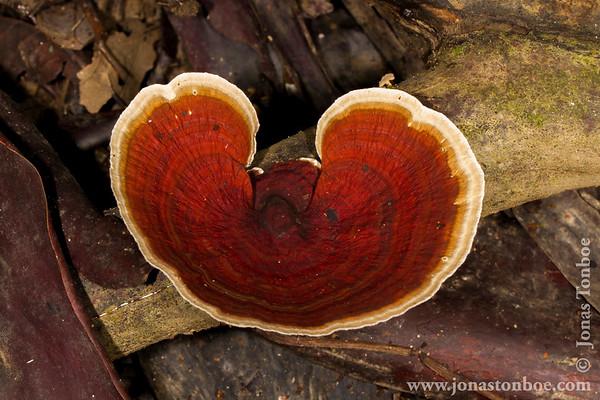 Yasuni National Park. Napo Wildlife Center: Fungus