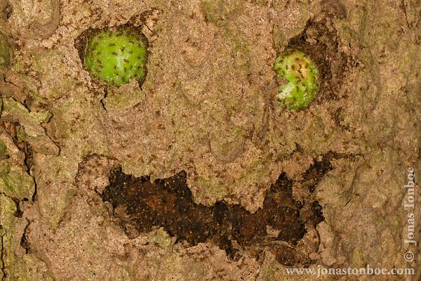 Yasuni National Park. Napo Wildlife Center: Termite Nest face