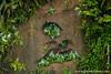 Mealy Amazon