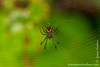 Yasuni National Park. Napo Wildlife Center: Spider