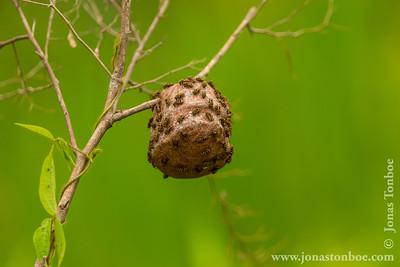 Yasuni National Park. Napo Wildlife Center: Bee's nest