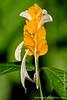 Sacha Lodge Private Reserve: Flower