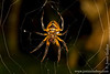 Sacha Lodge Private Reserve: Spider