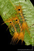 Yasuni National Park: Caterpillar