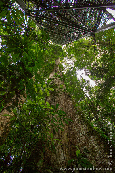 Kapok Canopy Tower