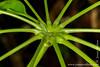 Leaf Stems