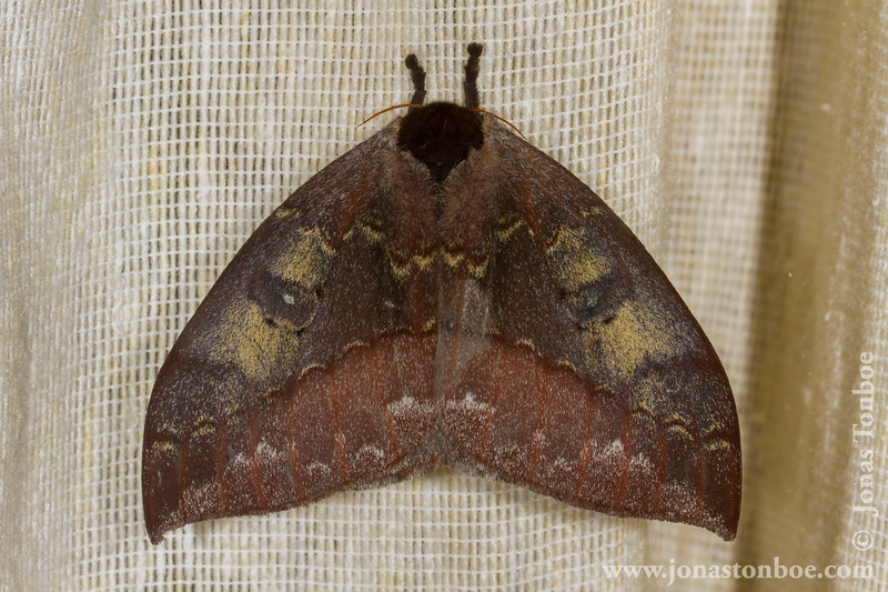 Yasuni National Park. Napo Wildlife Center: Moth