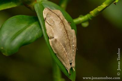 Yasuni National Park. Napo Wildlife Center: Frog