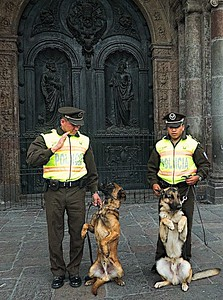 Police dogs posing for the tourists