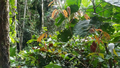 Exploring the Amazon vegetation near the lodge