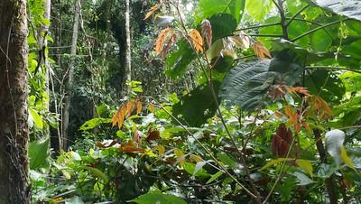 Exploring the Amazon vegetation near the lodge