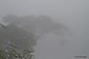 Birding in the fog, Mashpi, Aug 15.