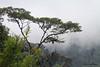 Fog (kinda) lifted,  Mashpi, Aug 15.
