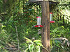 Sachatamia Lodge Hummingbird feeders, Aug 10.