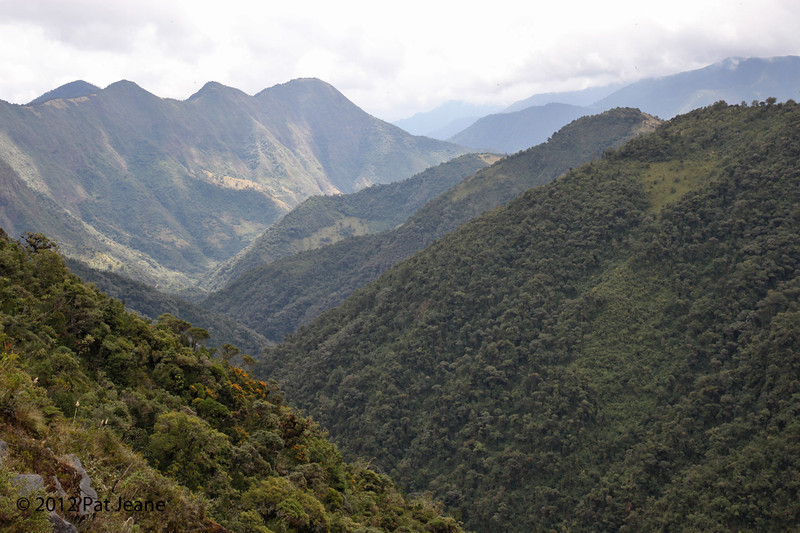 From the trails of  Yanacocha Reserve, Aug 18,