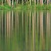 Lagoon reflection