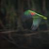 Parrot Blur