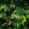 PIF (parrot in flight)