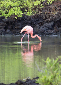 ....and here is that lone flamingo...pretty far away, so this is a crop of a zoom....still not too bad though.