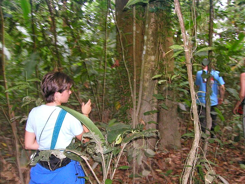 Leaving the trail to view some medicinal plants