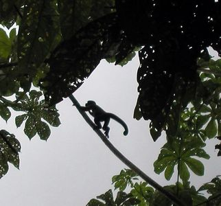 Ecuador - The Jungle