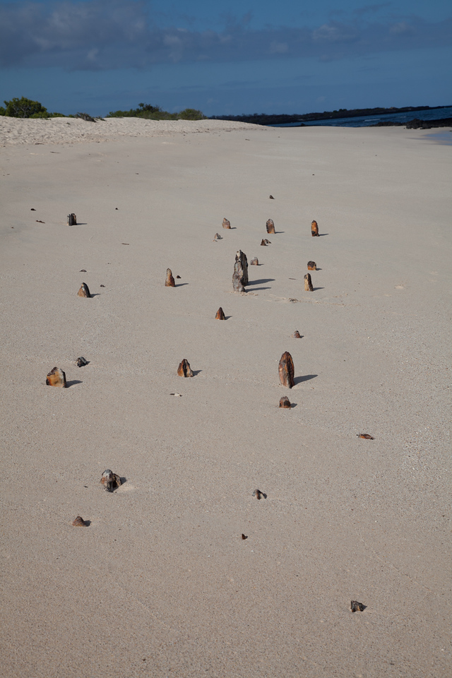 Remains of the hull (?) of a US Navy ship lie below the sand on northern Santa Cruz Island.