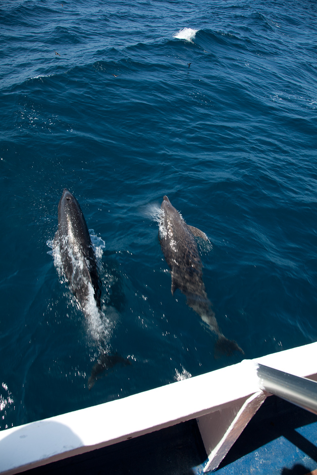 Dolphins swimming along with our boat - see video.