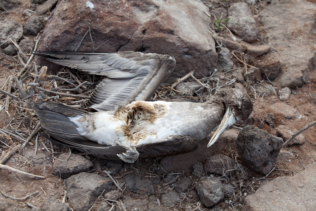 A bird carcass - not everything makes it in the wild.