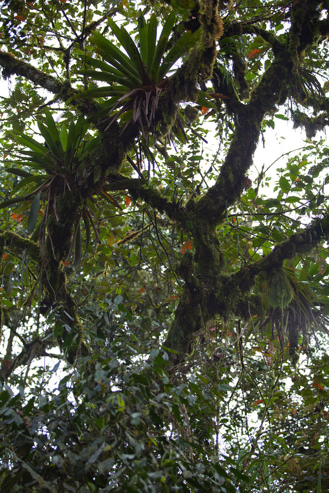 The canopy of the cloud forest around El Monte in Mindo.