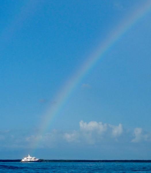 Petrel and rainbow