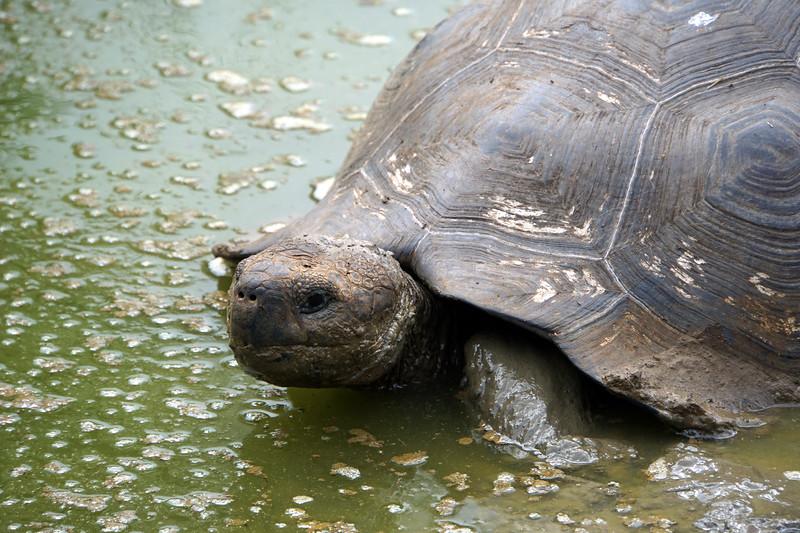 Santa Cruz, Rancho Primicias Giant Tortoise Reserve