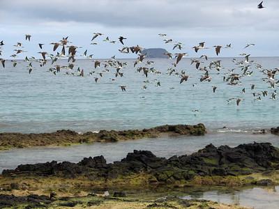 Bachas Beach, Santa Cruz, Galapagos