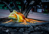 • Location - Santa Cruz<br /> • Large sculpture of a Galapagos Iguana at town center