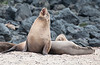 A Sea Lion telling its mate its time to get up