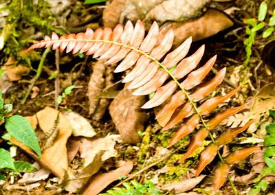 Ferns seen evrywhere.